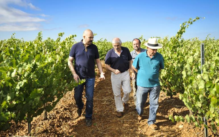 La autenticidad de nuestros vinos es la viticultura